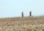 বাংলাদেশ পাচ্ছে ৫০০০ একর জমি